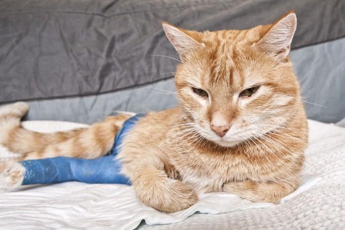 足を怪我した猫