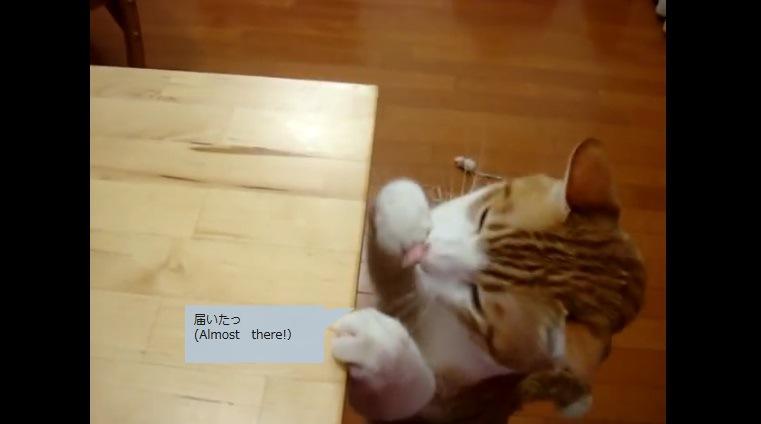 ソーセージを食べる猫