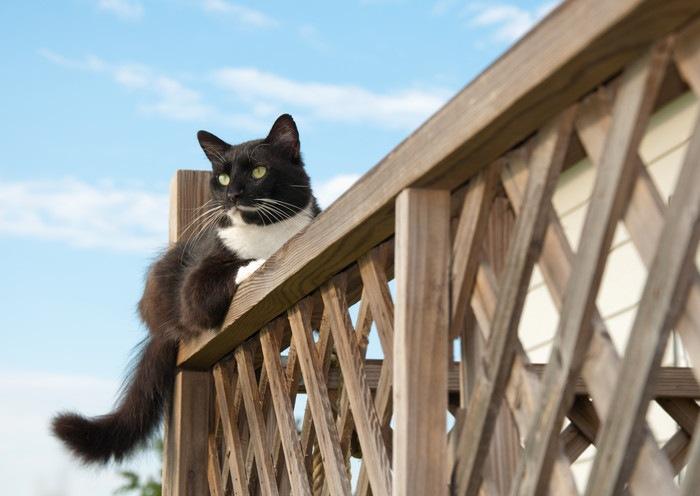 フェンスに伏せる猫