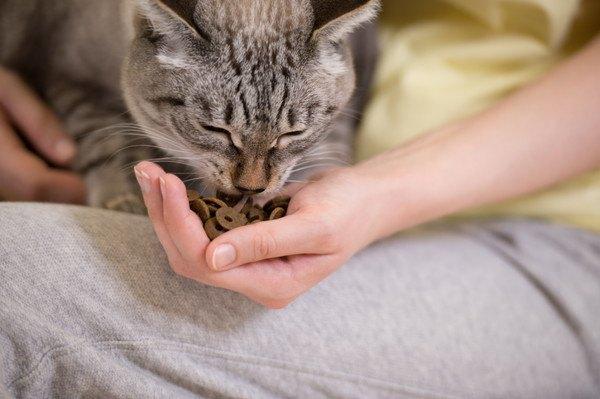ご飯を手からもらった猫