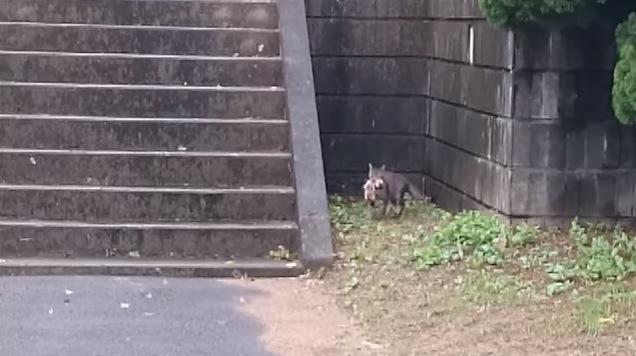 子猫をくわえる母猫