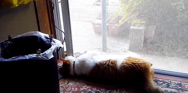 横になって網戸を開く猫