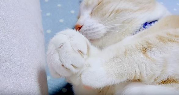 眠りながら前足を丸める猫