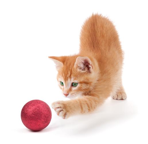 ボールを追う猫