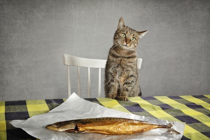 魚を前にした猫