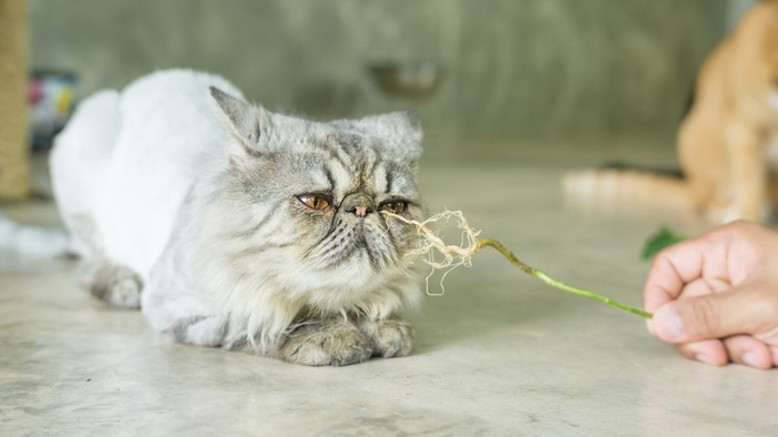 草の根っこを嗅ぐ猫