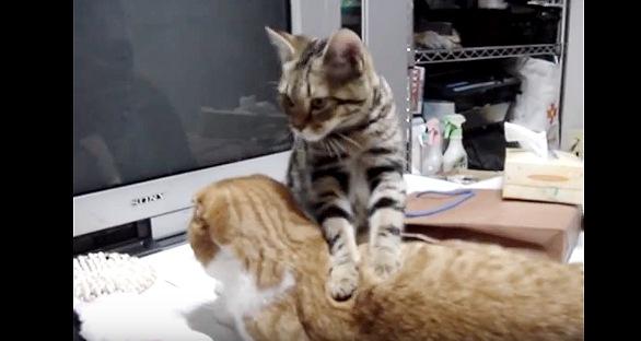 猫が猫にマッサージ