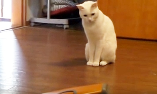不思議そうにしている猫