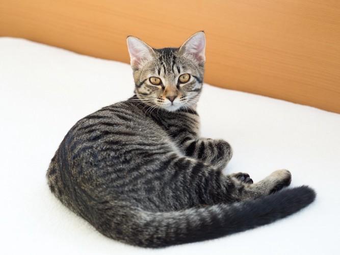ベッドの上でくつろぐ子猫