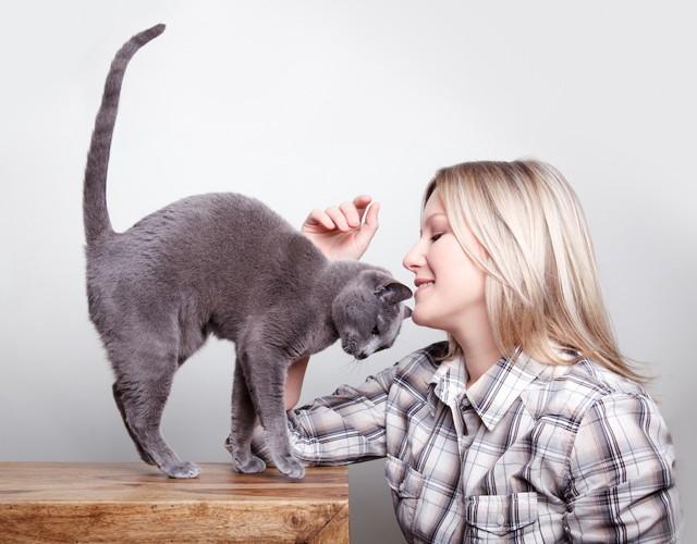 机の上で女性に甘える猫
