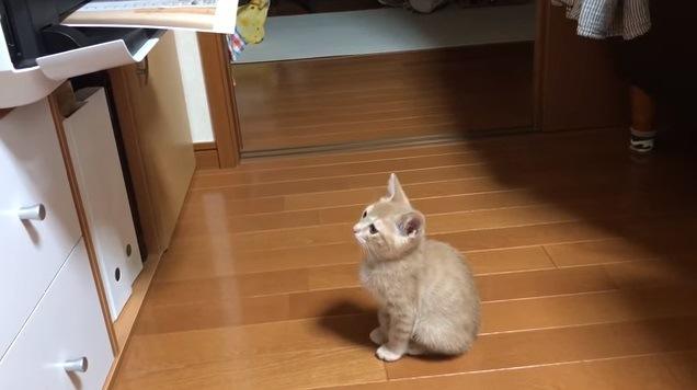 出てくる紙を見つめる猫