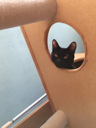 丸い穴から顔を出す黒猫
