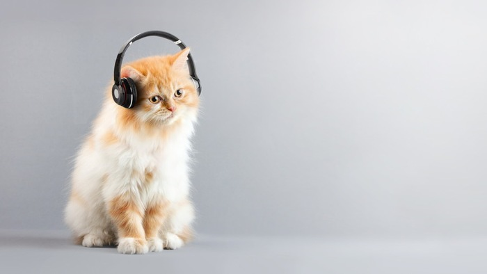 音楽を聞いている猫