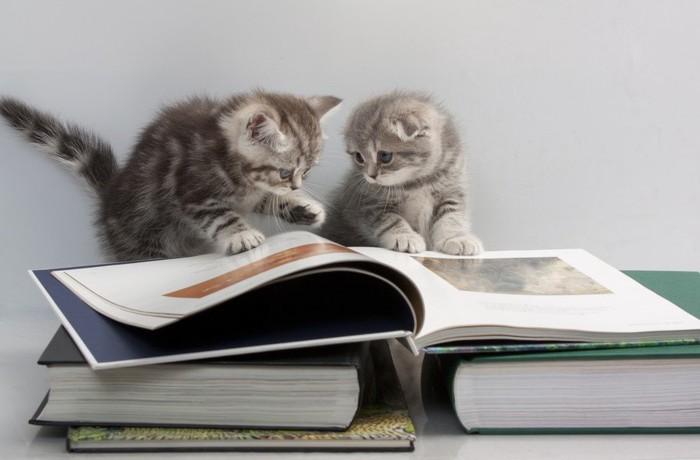 大きな本を見る二匹の子猫