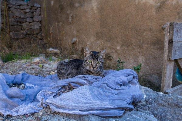 青い布とキジ猫