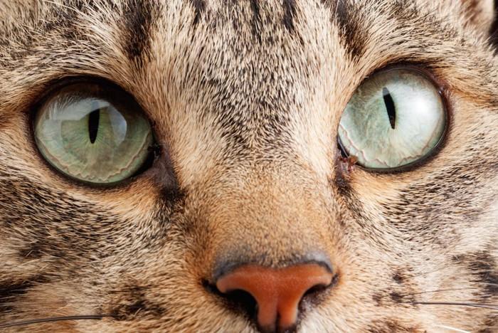 グリーンの猫の目アップ
