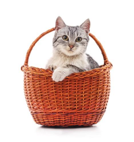 ぴったりサイズのバスケットに入った子猫