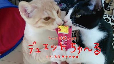 仲良く2匹でチュールを食べる猫