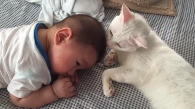 指しゃぶりをする赤ちゃんと寄り添う猫