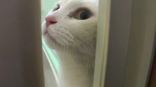 扉から覗く猫