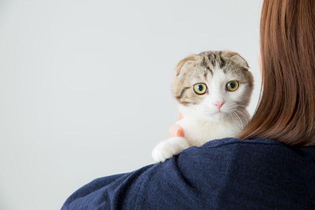 肩越しにみている猫