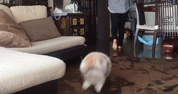 画面手前から向こうへ走る猫