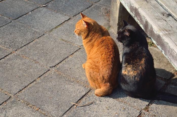 寄り添って座る飼いやすいオスとメスの猫