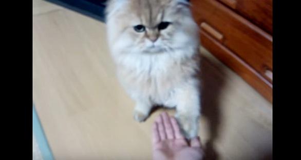 オテする猫