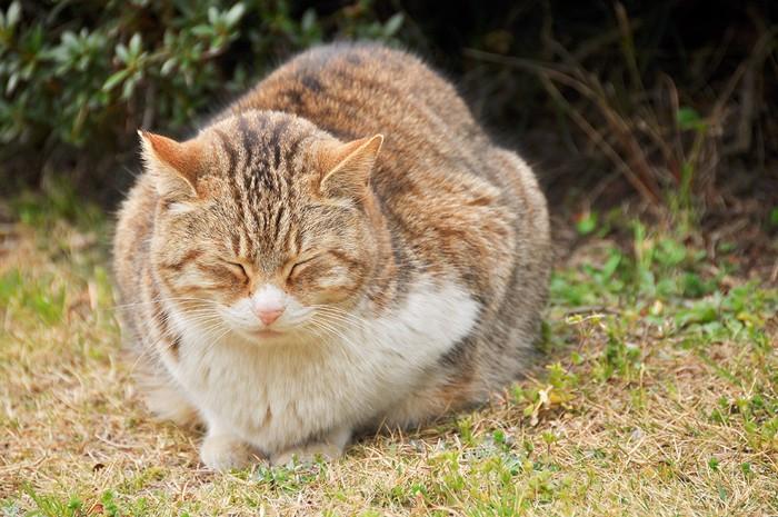 座りながら眠る猫