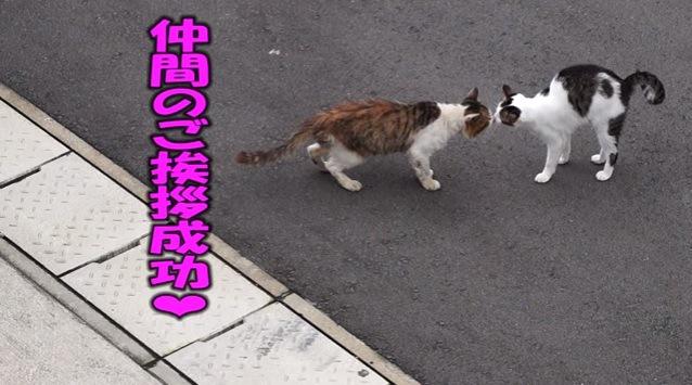 鼻同士をくっつけ合う2匹の猫
