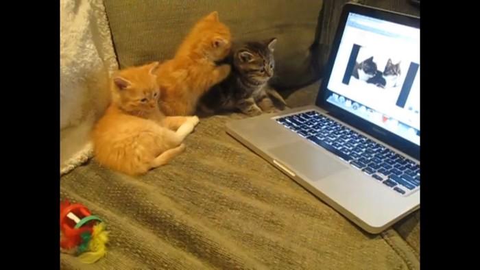 お喋りする猫の動画をみせる