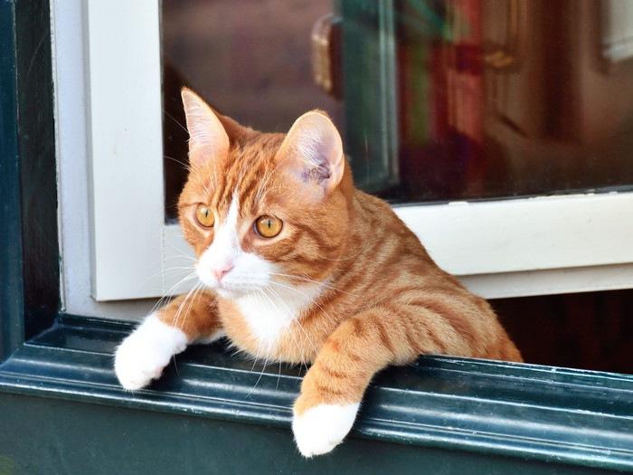 ドアから覗く猫の写真