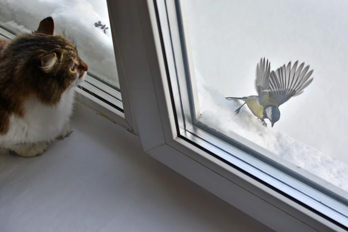 窓から鳥を見る猫