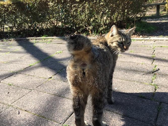 お尻を向けて振り返る猫