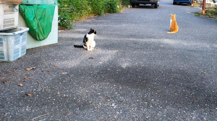道路に座る二匹の野良猫