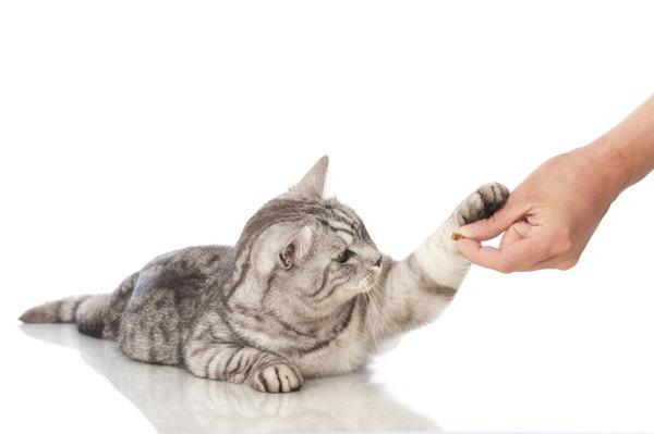 手を出す猫