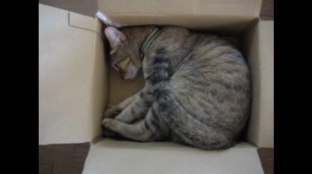 箱の中で丸まる猫
