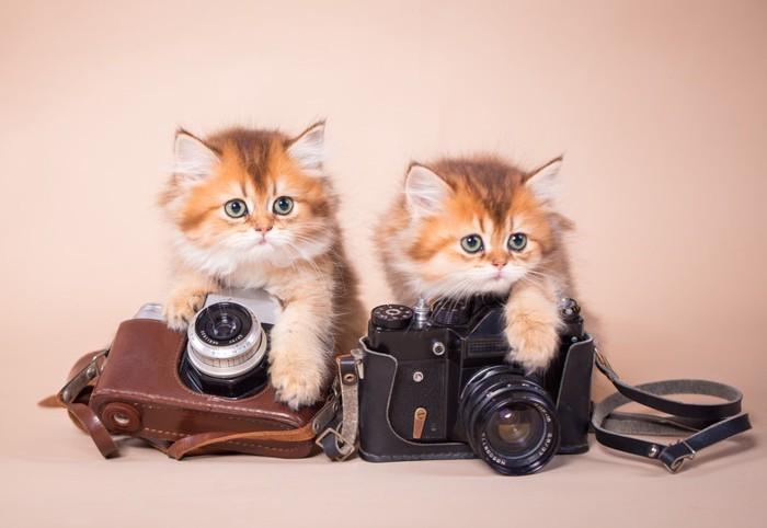 2匹の子猫とカメラ