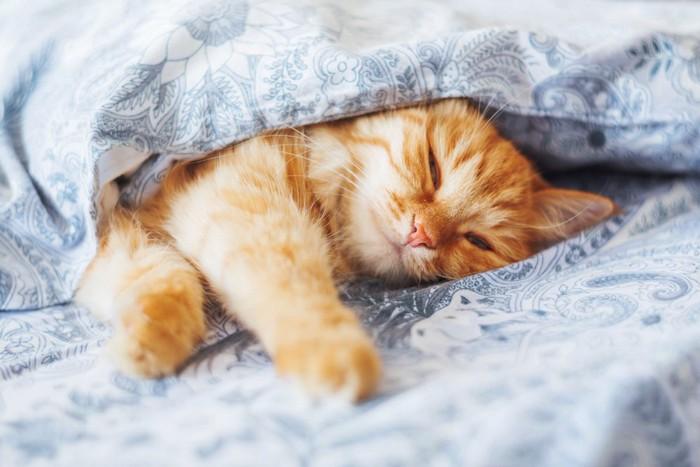 布団の中で気持ちよさそうに眠る猫