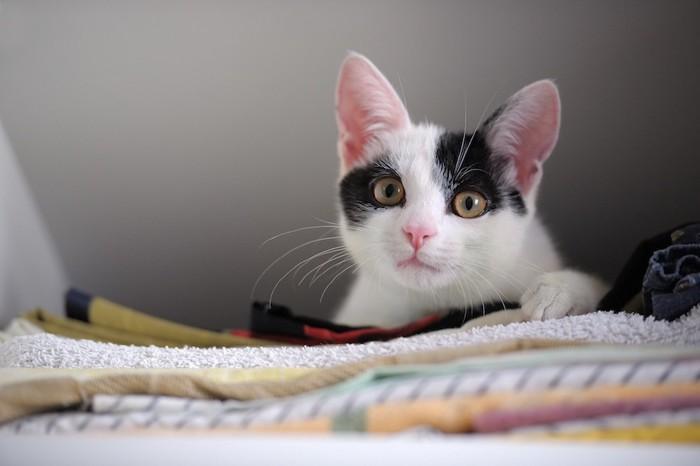 タオルの上でくつろぐ子猫