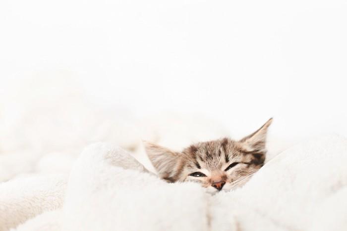 布団に入り気持ち良さそうな仔猫