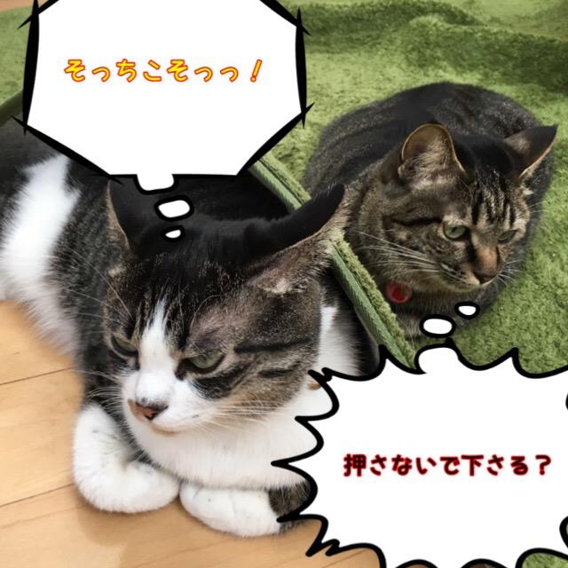いがみ合う猫達