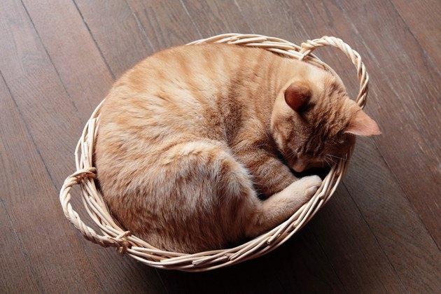 カゴの中で丸まる猫の写真