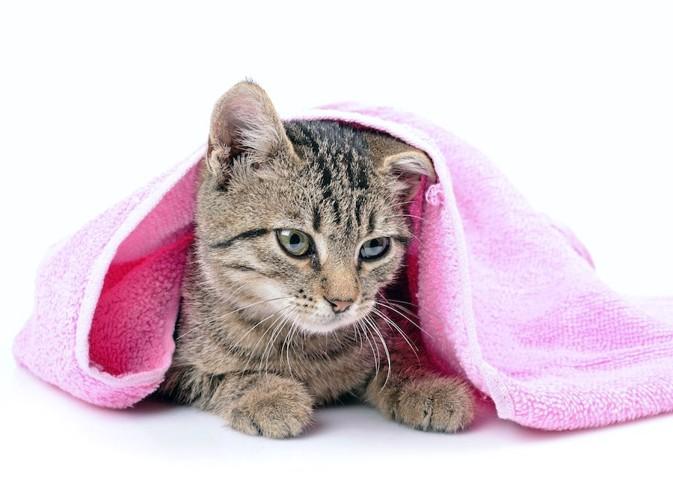 ピンクのタオルと子猫