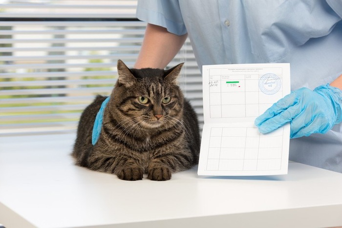 検査用紙と猫