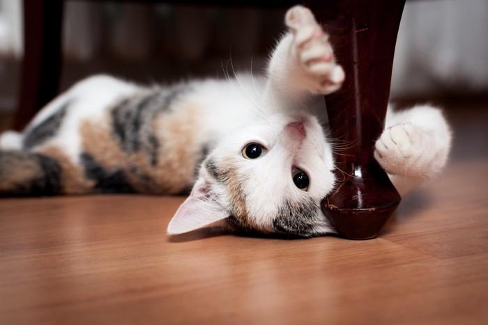 仰向けで手を伸ばす猫