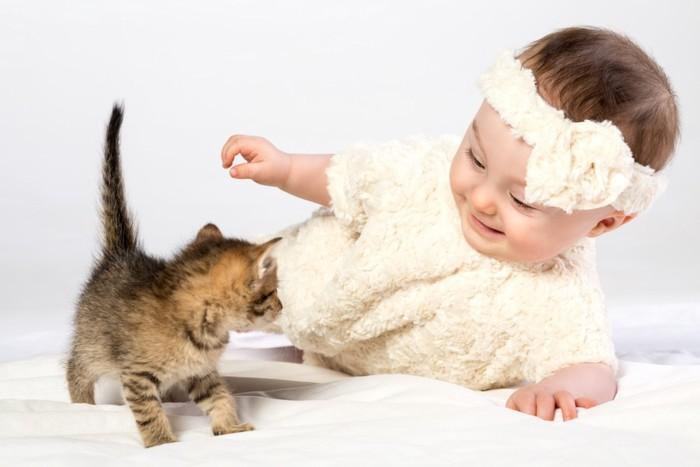 子猫と赤ちゃん