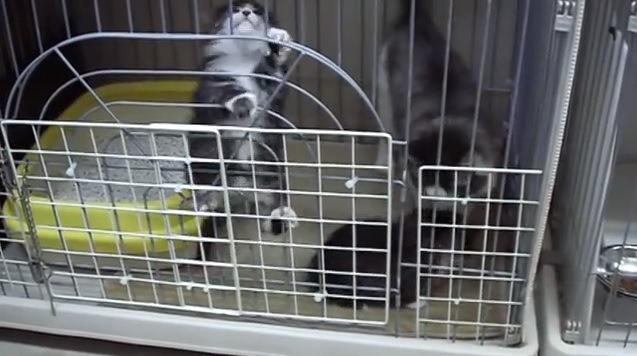 ケージをよじ登る子猫
