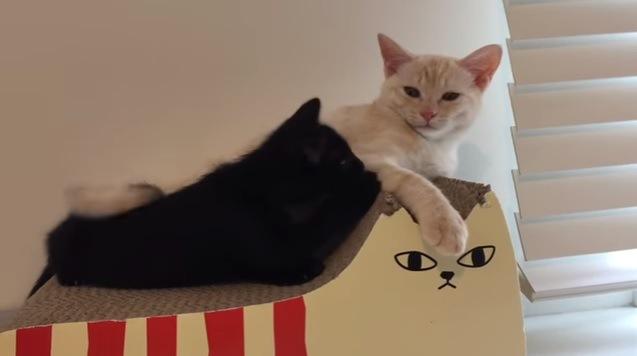 爪とぎ器の上で寝そべる猫達