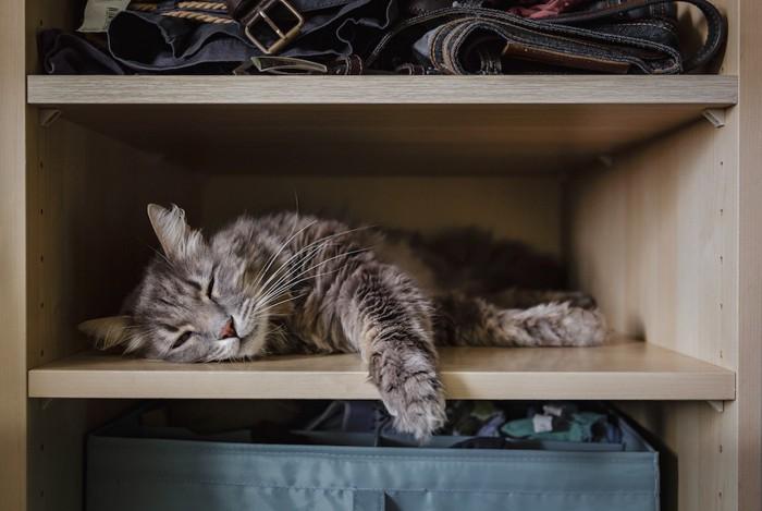 棚に乗る猫